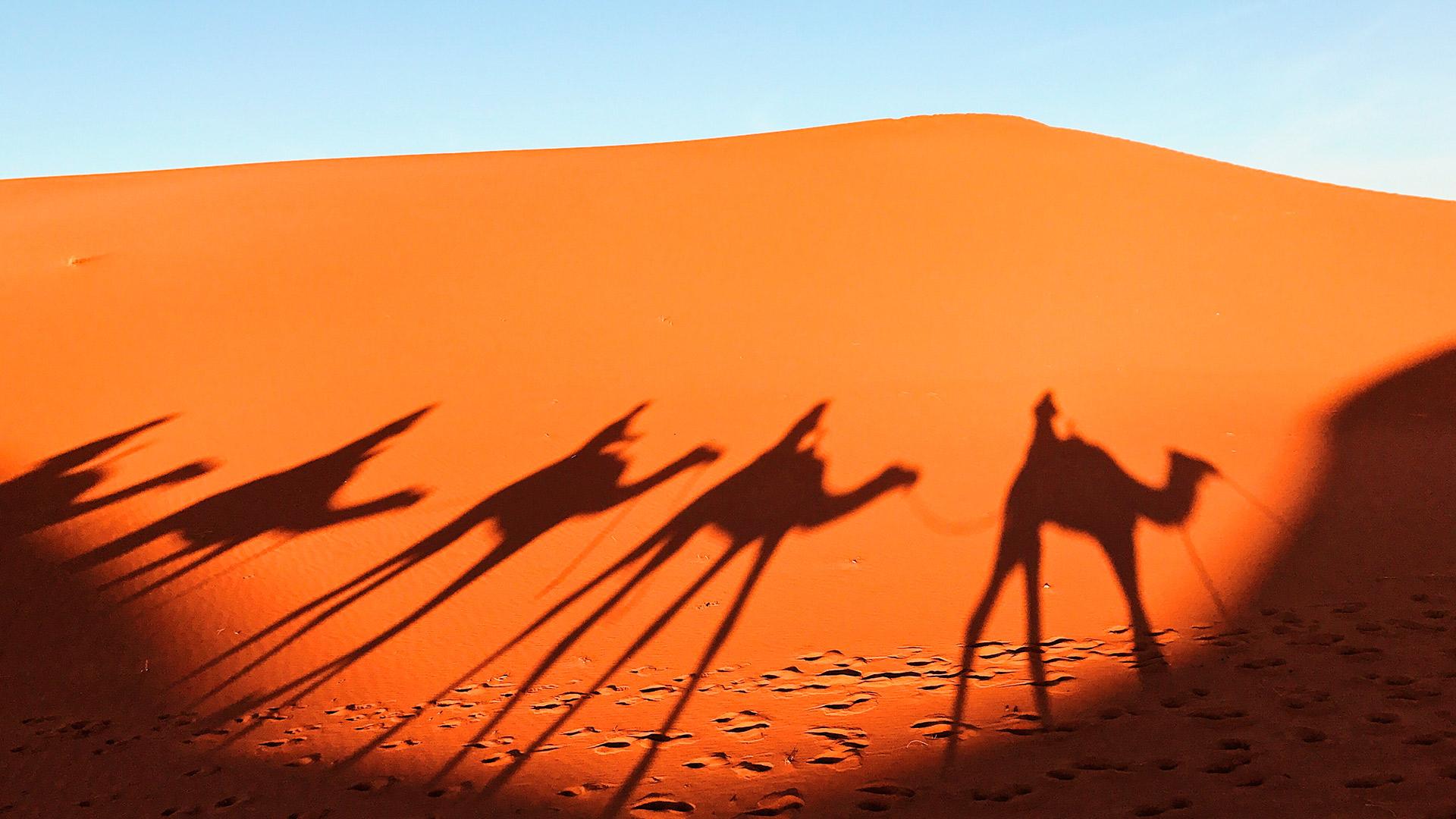 Las curiosidades sobre la vida en el Sáhara | Lexus España