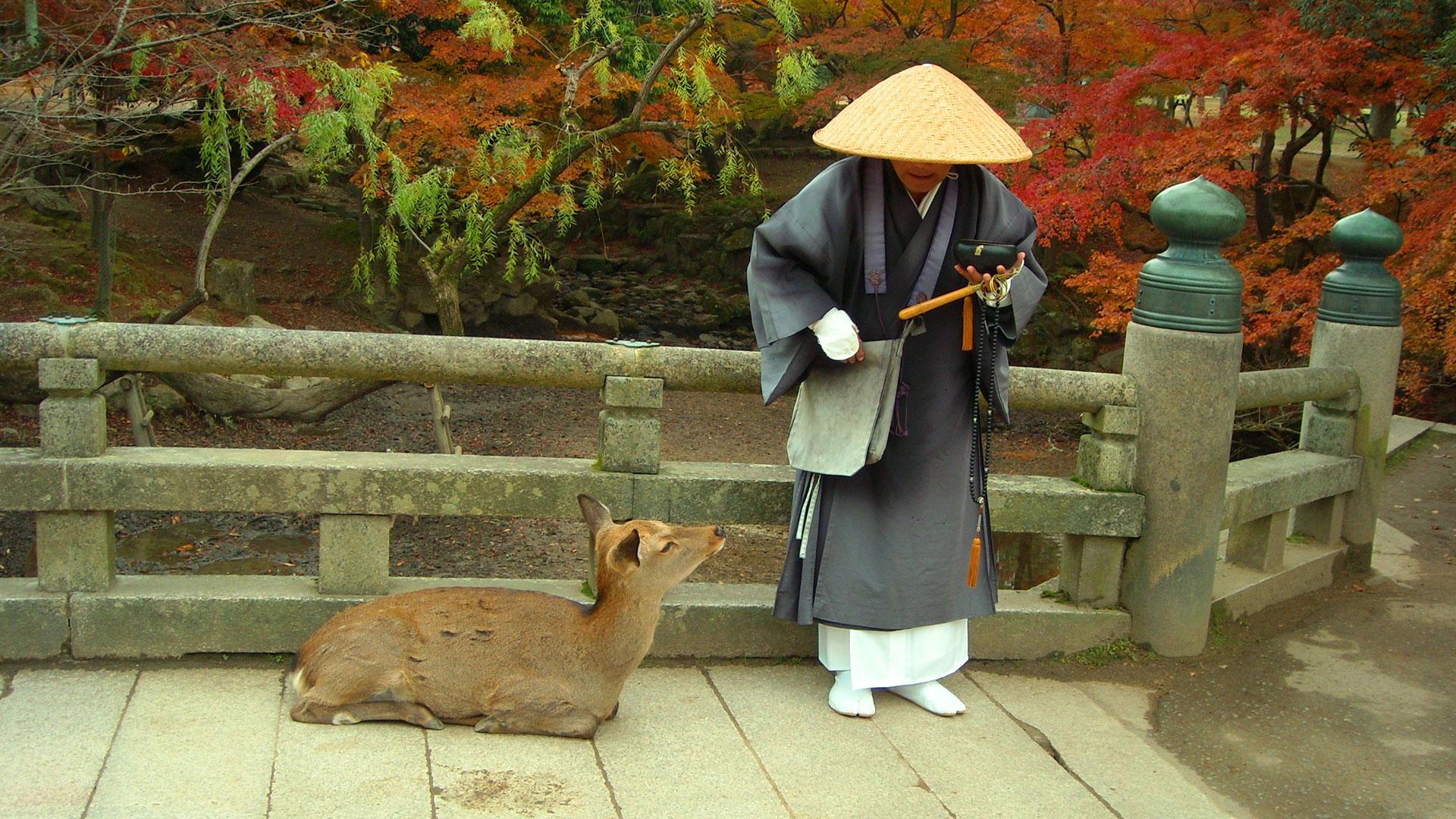Nara Japón hero asset